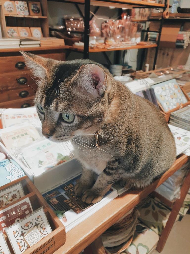 Zoozoo the cat